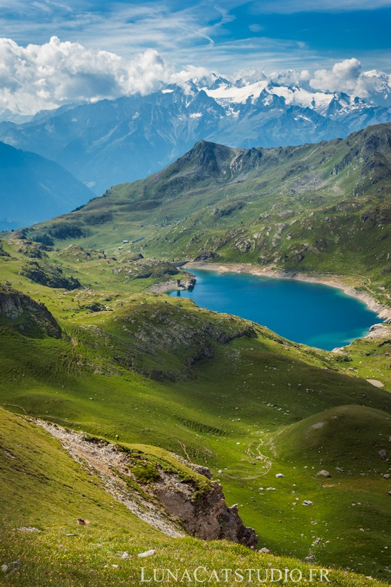 photo-marmotte-suisse-1