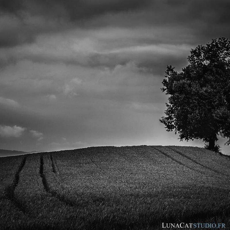 photographe paysage arbre solitaire