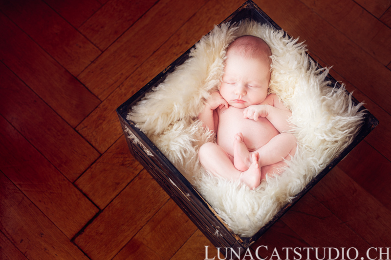 newborn photographer léonard
