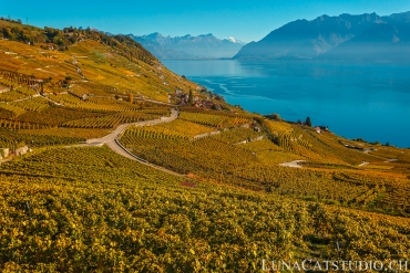 family mini photo session Lavaux vineyard